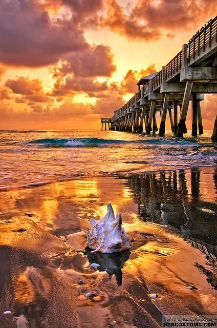 Golden sunrise over Juno Beach Pier ~ Palm Beach County, Florida (photo by Justin Kelefas, Jupiter, Florida)....