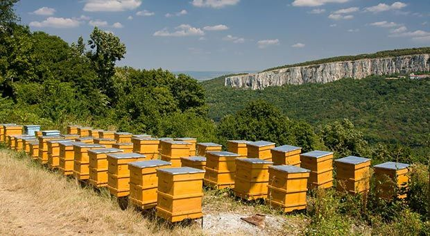 Raising Bees for Survival: Should You Do It?