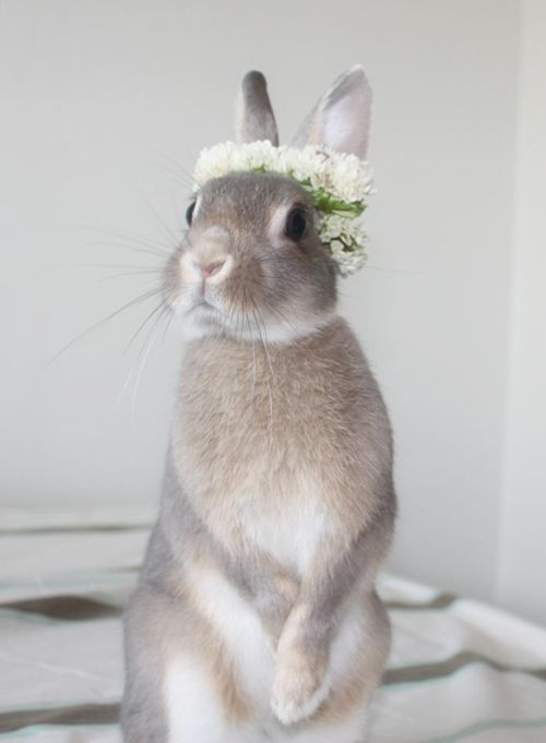 bunny - is this a wedding look or just a spring choice?