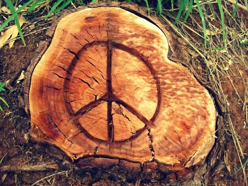 1000 images about upcycled garden art on pinterest for Upcycled tree stumps