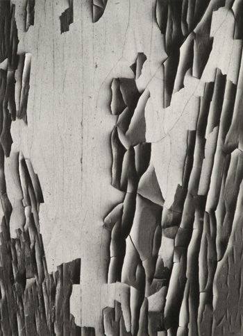"Jerome 20 by Aaron Siskind. ""If you look very intensely and slowly, things will happen that you have never dreamed of before."" -Aaron Siskind, photograph, photography, fine art"