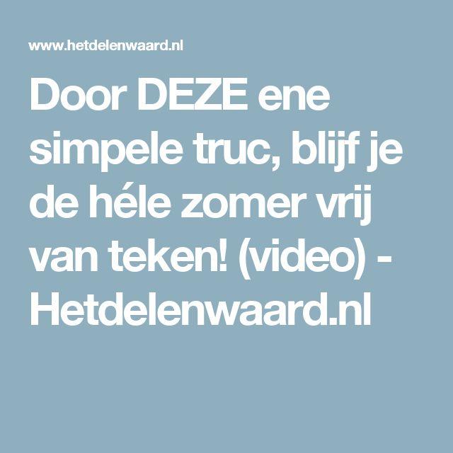Door DEZE ene simpele truc, blijf je de héle zomer vrij van teken! (video) - Hetdelenwaard.nl