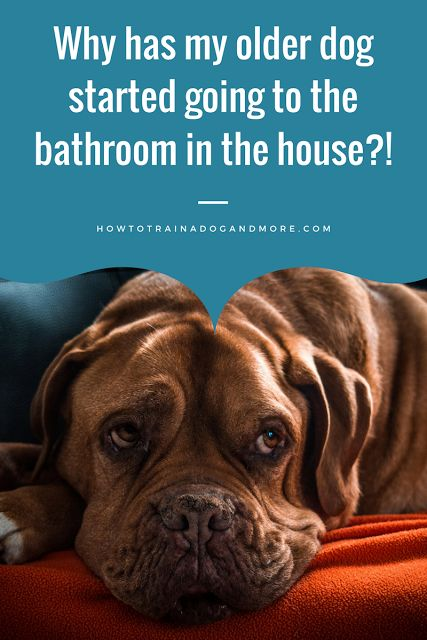 Do you have an older dog that started to go potty in the house?   You can't figure out why?  visit this blog for lots of dog training tips, including barking, biting, aggression, toilet training, jumping, pulling, separation anxiety and more!