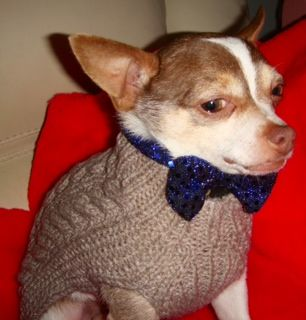 Nibz 2 year old.  6lb male.  neutered chihuahua - Needs a forever home. Up for adoption!
