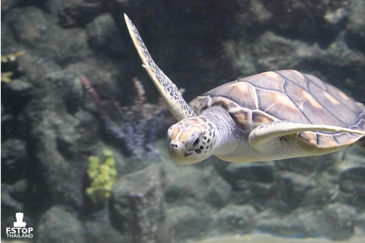 Sea Turtle: Sea Turtles