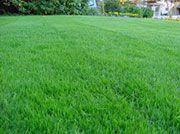 Progettazione giardini - Produzione e vendita piante e olivi. Realizzazione giardini e progettazione giardini a Cellatica, Brescia. Paesaggista