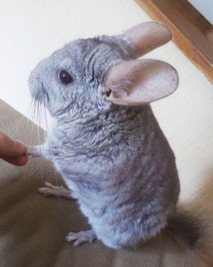 21 kleine Tiere, die im Internet viel zu wenig Beachtung finden