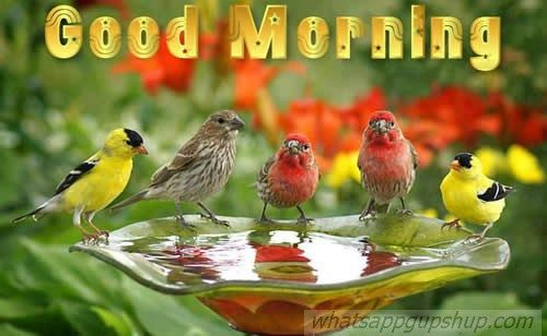 Good Morning, Sweet Day, happy day, good day, fresh flowers, colors, beautiful images, whatsapp images, Whatsapp, whatsappgupshup, whatsapp gupshup, wonderful Good morning , Good Morning images,