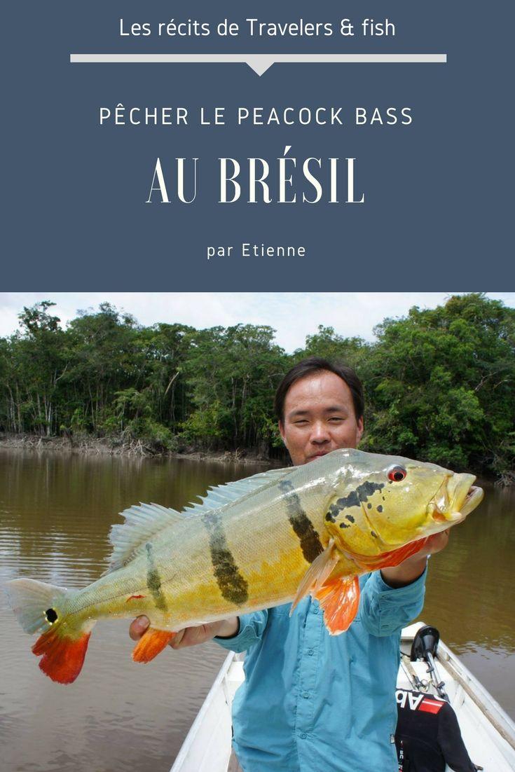 Pecher Le Peacock Bass Au Bresil Voyage De Peche