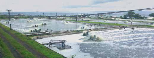 Intensive shrimp farming Biofloc system