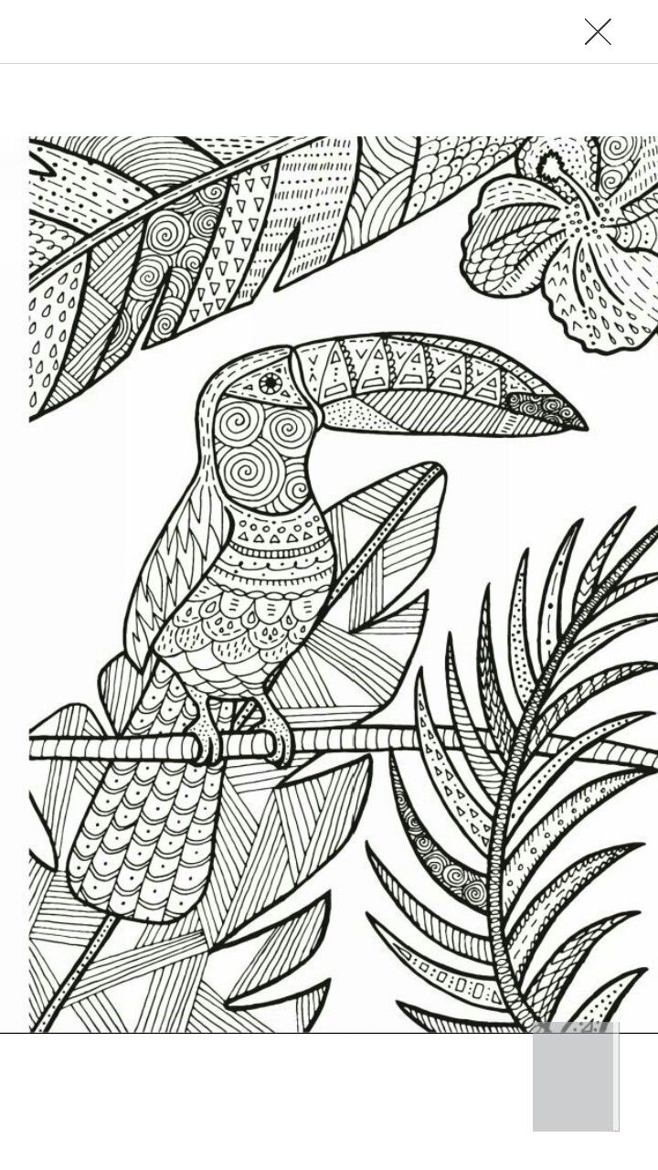 Vector Hand Drawn Toucan Bird Tropical Illustration For Adult Coloring Book