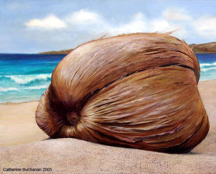 http://www.catherinebuchanan.com/Beach_Coconut.jpg