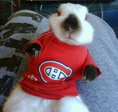 Lapin Canadiens, photo soumise par Jason Cappadocia / Habs bunny, submitted by Jason Cappadocia