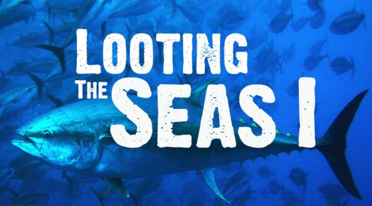 Looting the Seas - The Black Market in Bluefin | ICIJ: International Consortium of Investigative Journalists