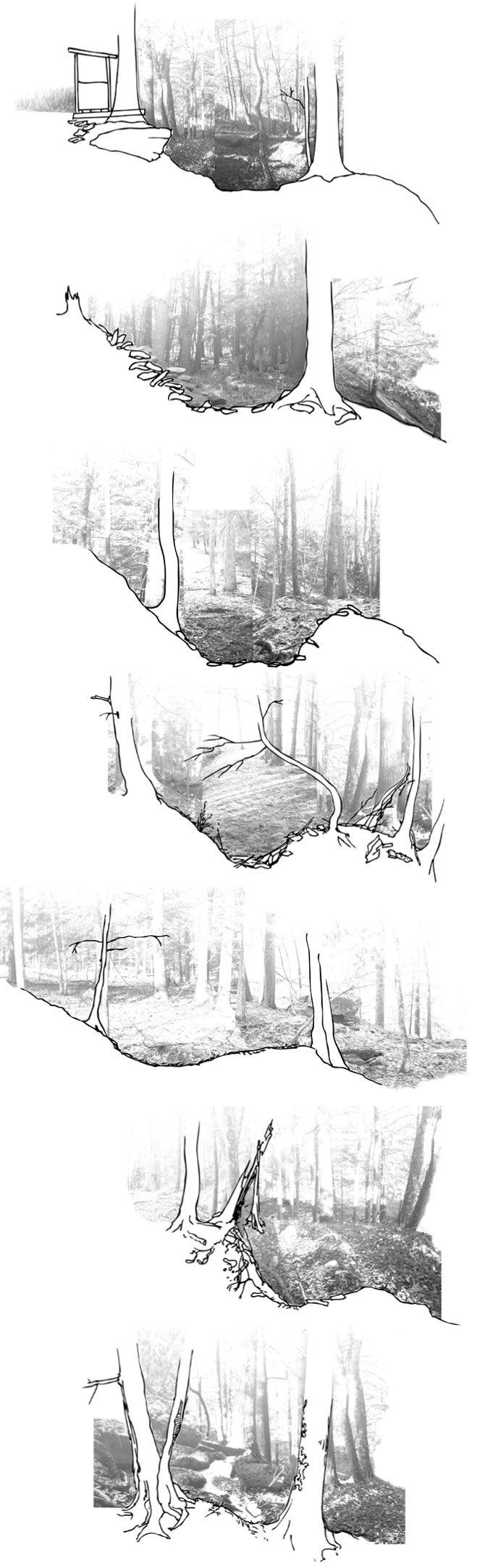 MildredsLane, LandArt, ArtistResidency, LandscapeArchitecture, Section, Collage, Woodland (PondHouseSpringHousePond - Kate Farquhar Landscape)