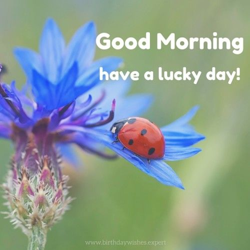 Good Morning. Have a lucky day! ...♥♥...