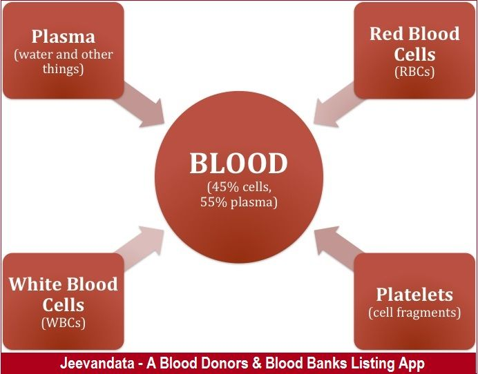 What is the percentage of water in the blood? Plasma. Plasma is the liquid portion of blood – a protein-salt solution in which red and white blood cells and platelets are suspended. Plasma, which is 92 percent water, constitutes 55 percent of blood volume. #Jeevandata: Register here for FREE!!! If you wish to #donate_blood or looking for #blood_banks_list, so install app now: https://play.google.com/store/apps/details?id=blooddonationapp.in.blooddonationapp.blooddonation&hl=en