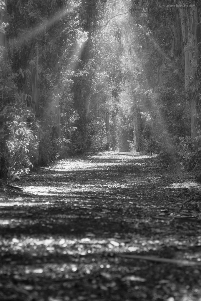"Misty Trail - MyCreativeVoid  © Taylor St. Photography 2014 ""Since I'm inarticulate, I express myself with images."" - Helen Levitt (queue)"