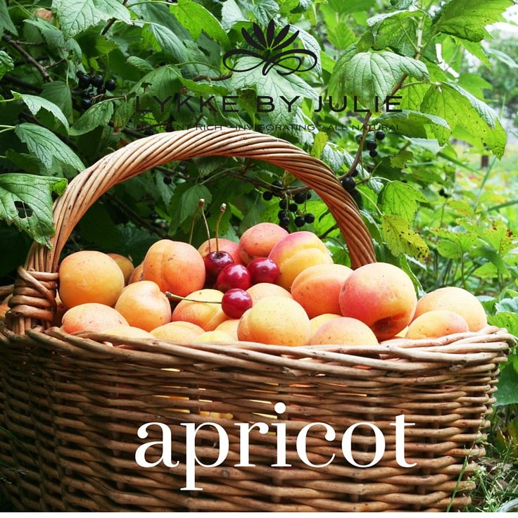 Apricot kernel oil comes from the kernel and contains essential fatty acids A and C vitamin . It has light texture and is well absorbed and provides natural glow to the skin