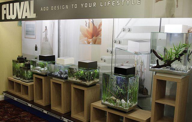 Fluval Edge Collection by Chris Farmer. Inspirational nano fish tank design.