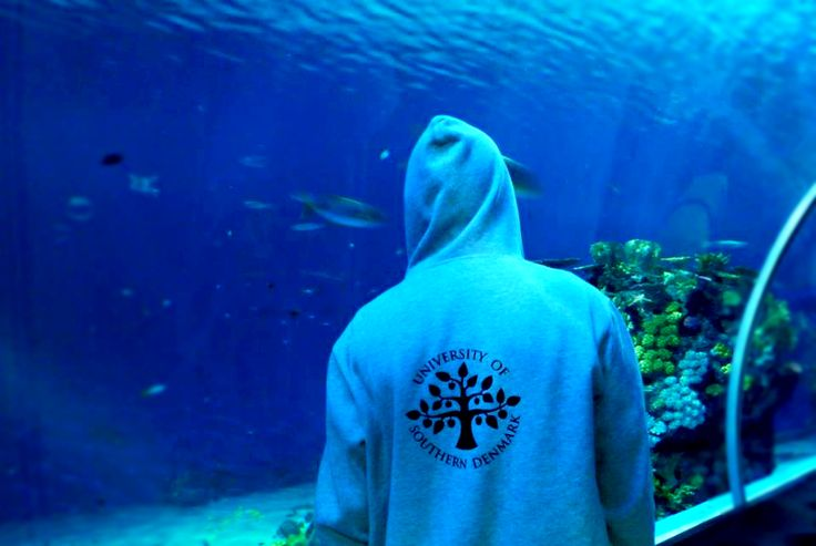 The #FamousSDUhoodie in #Kerteminde, #Denmark, #University of Southern #Denmark https://www.facebook.com/unisouthdenmark