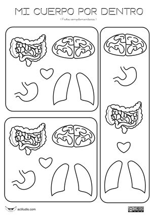Free Internal organ printable that can be used in