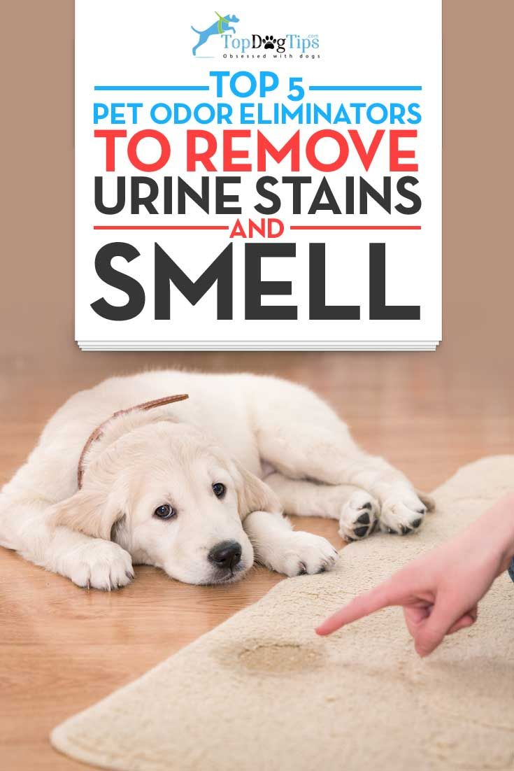 Top Best Pet Odor Eliminators for Removing Dog Urine Smell. It's likely that house training a dog is the most frustrating responsibility of a pet owner. The worst part is the urine smell that you can never seem to get rid of. These best pet odor eliminator products will keep your home smelling fresh and clean, even when you're potty training your new puppy. #dogs #stains #pets #petodor #dogurine #smell