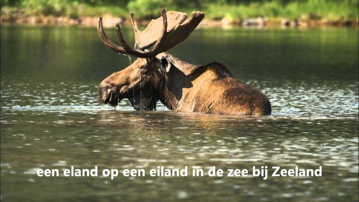 eland op een eiland