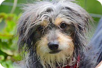 Brooklyn, NY - Terrier (Unknown Type, Medium) Mix. Meet Mick Jagger, a dog for adoption. http://www.adoptapet.com/pet/18520937-brooklyn-new-york-terrier-unknown-type-medium-mix
