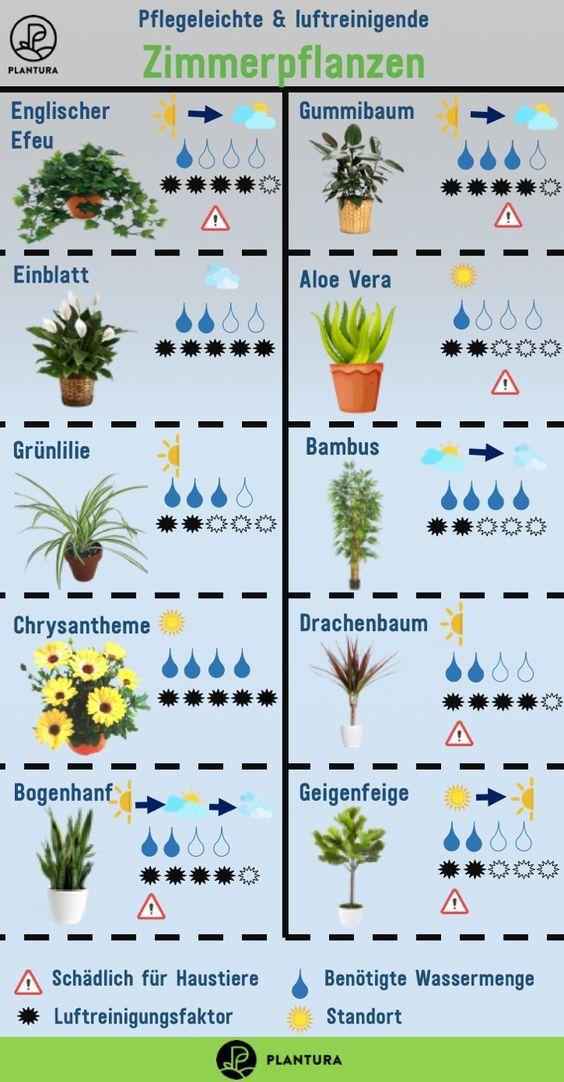 Luftreinigende Pflanzen: Die Top 10 | plants | Wohnung pflanzen ...