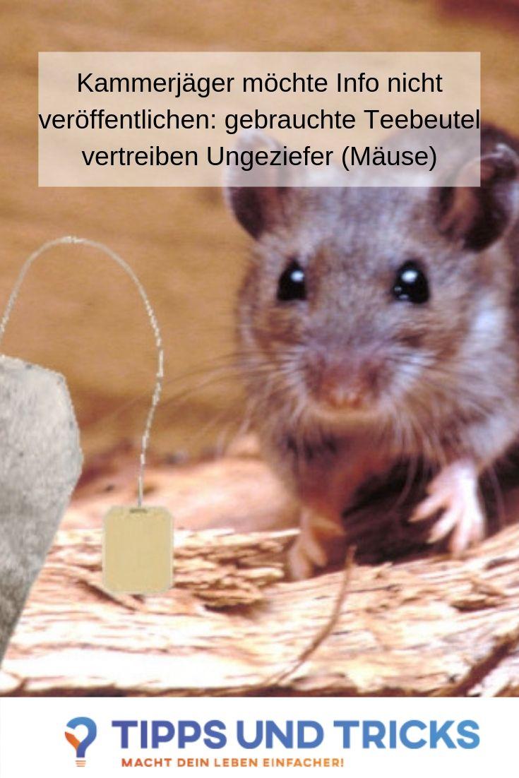 Mause Im Haus Gebrauchte Teebeutel Fertig Und Tschuss Maus Im Haus Ameisen Im Haus Teebeutel
