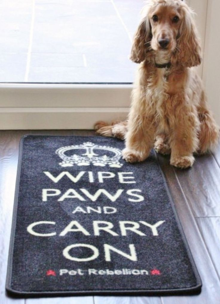 Door mat floor barrier rug WIPE PAWS AND CARRY ON will stop those muddy paws, machine washable, non-slip from www.blissandbloom.co.uk