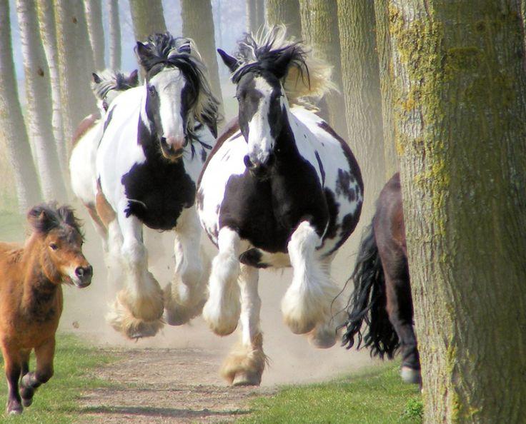 The run home - from voorjaars kriebels