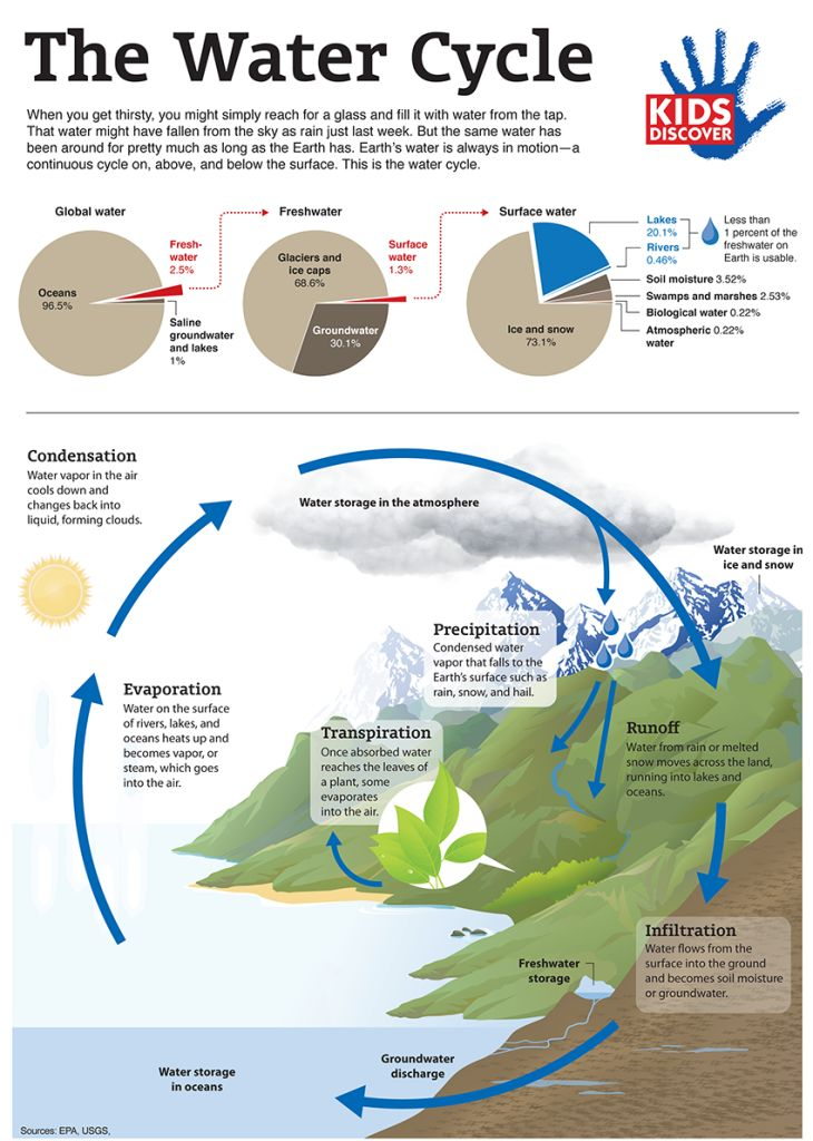 The Water Cycle: Infographic