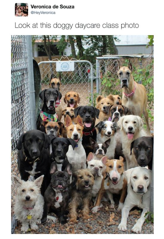 Well this makes me want to quit my day job and open up a doggie day care!