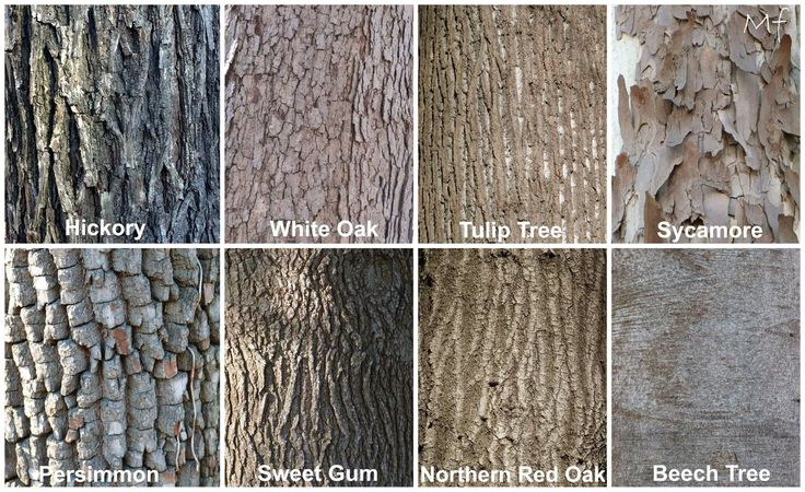 Tree Bark Garden Flash Cards Pinterest Trees