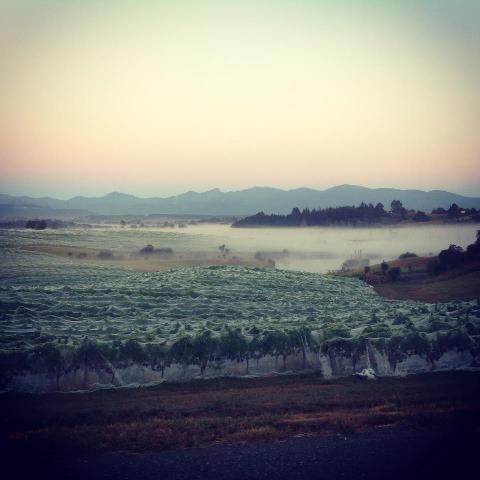 Woollaston Estates on a misty morning