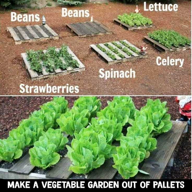 Make a Vegetable Garden Out Of Pallets / Old pallet wood #palletprojects #gardenideas #diycrafts #lifehacks