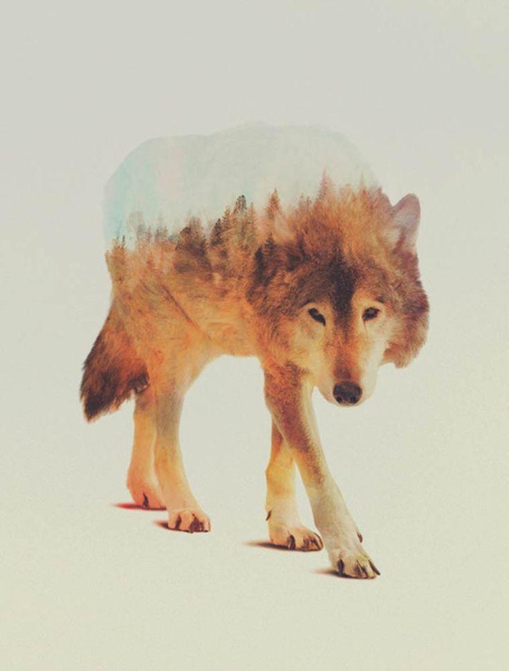"Andreas Lie, ""Animal Kingdom"""