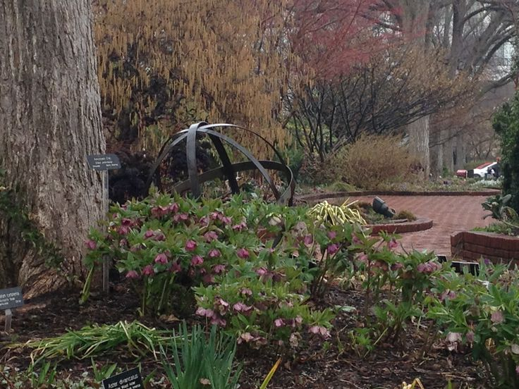 The Mary Livingston Ripley Garden wakes up in spring.