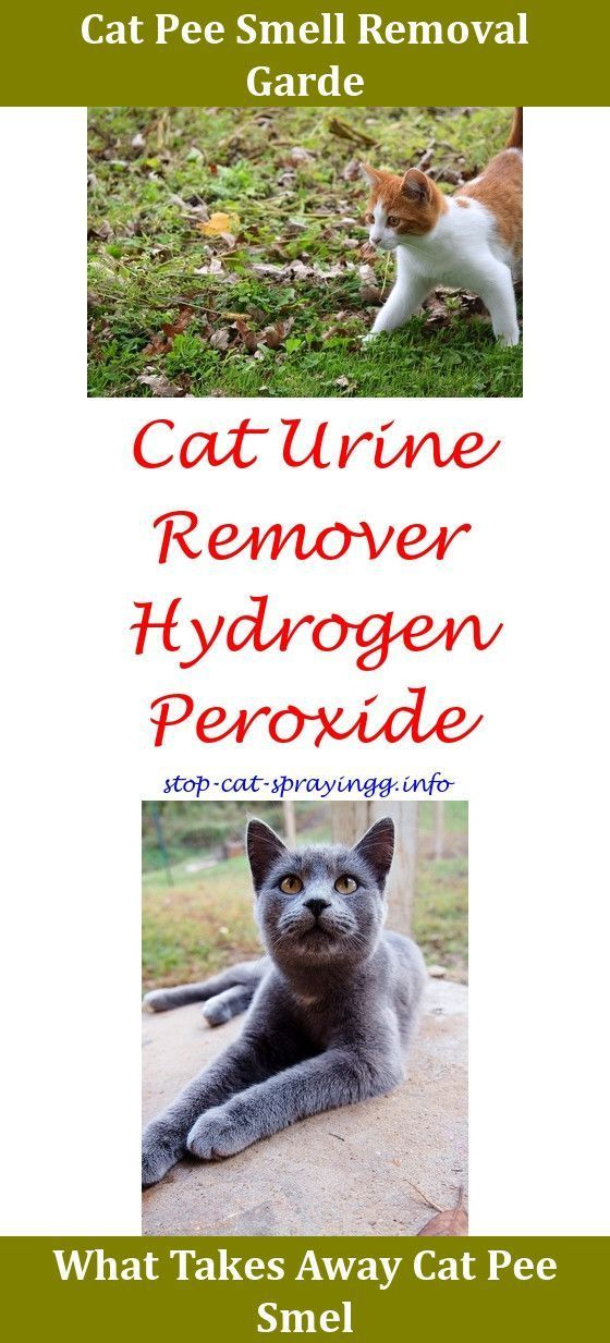 Spray To Stop Cats From Peeing On Furniture What Is Cat