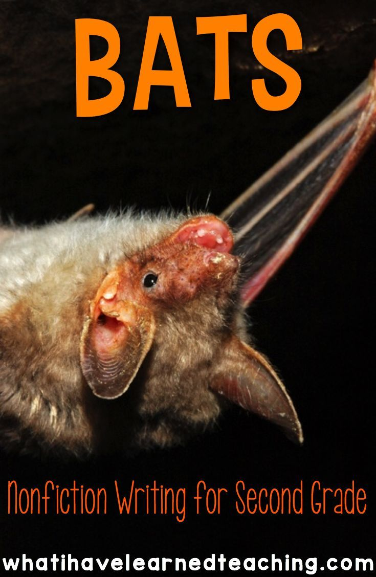 writing activities about bats On this teaching website you will find stellaluna lesson plans that contain fun and unique bat shaped creative writing templates and activities that.