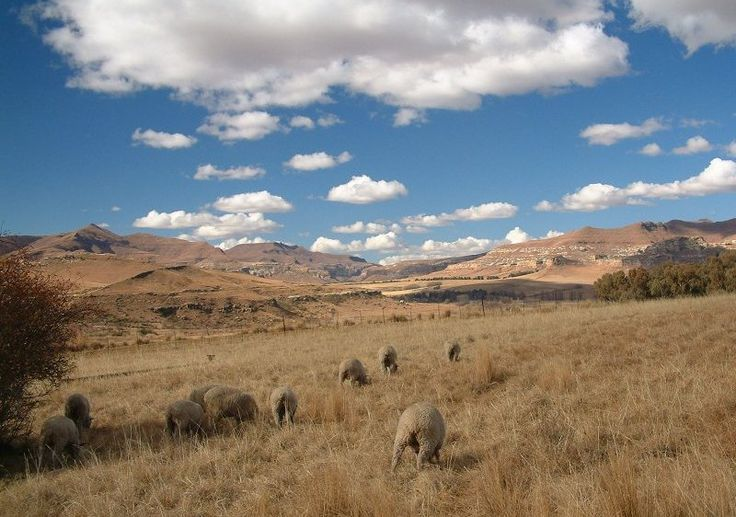 Near Clarens, Free State, South Africa. Not too baah-d (although that pun was)!