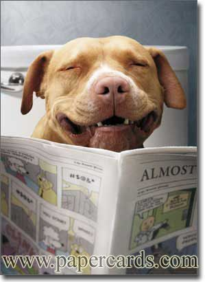 Dog Reading Funnies Funny Birthday Card