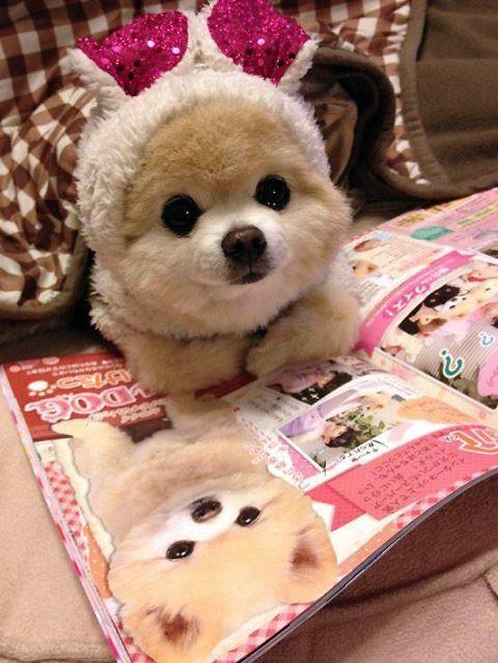 El perrito más tierno del mundo.