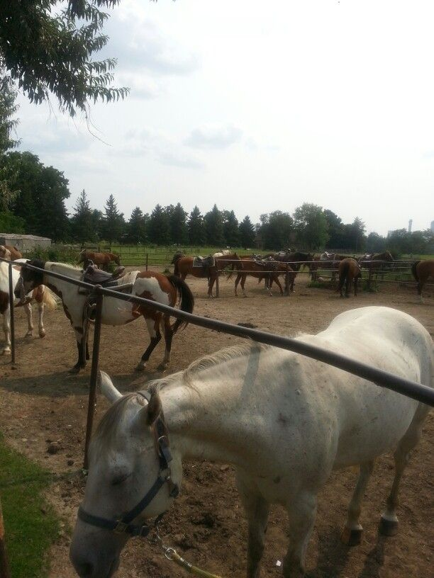 Clairville Ranch
