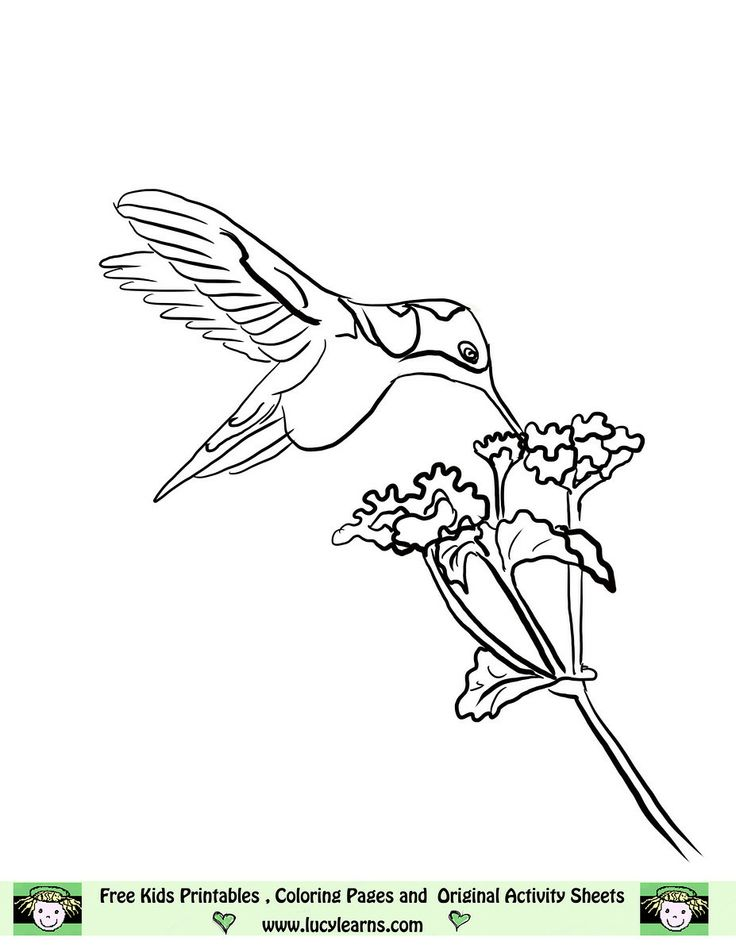 image detail for free hummingbird coloring page lucy learns humming bird coloring