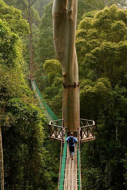 Borneo Rainforest Canopy Walkway - i'm terrified of heights, but I would have to do this!! This website is full of wonderful bucket list travel #darleytravel