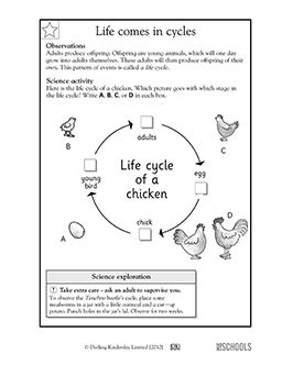 1st grade 2nd grade kindergarten science worksheets life cycles science animals science. Black Bedroom Furniture Sets. Home Design Ideas