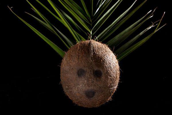 Kokosnuss: Ehre, wem Ehre gebührt - Coopzeitung - Die grösste Wochenzeitung der Schweiz